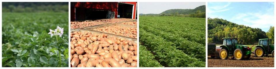Vermont Valley Community Farm LLC Organic Seed Potatoes